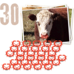 30 noserings