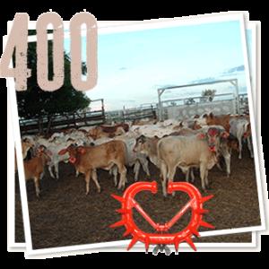400 noserings