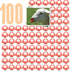 100 sheep noserings