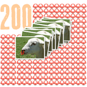 200 sheep noserings