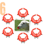 Buy 6 Noserings for lambs