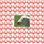 100 sheep or goat noserings for lamb or kid weaning