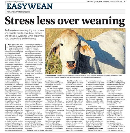 queensland country life stress less over weaning article